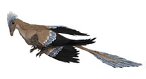 220px-Microraptor mmartyniuk