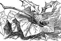 Snap-Dragon-Fly