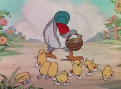 Figli della gallinella saggia