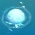 WhiteJellyFish