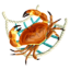 CrabNet