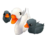 Sweetheart Swans