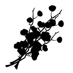 Fichier:Cotton alpha.png