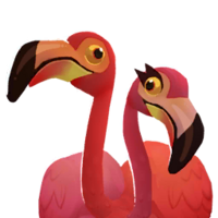 Portrait flamingos