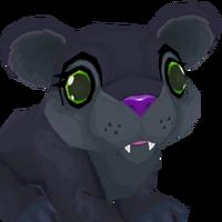 Portrait panther
