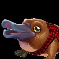 Portrait platypus