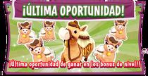 Pb promo camel last chance eventboard es
