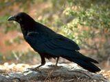Raven Paradox