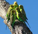 Parakeet Basics
