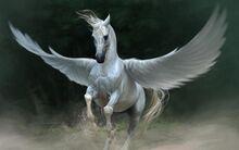 Amazon - Cecilia's Pegasus