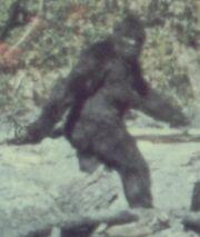 0817-bigfoot
