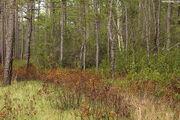 Greenswamp