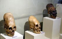 ParacasSkullsIcaMuseum