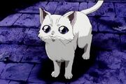 1126066344 noir-straycat