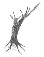 Heidi Smith tree