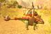 Dustrider Ankylosaurus Catapult