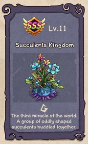 Succulents 11