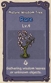 4 - Mature Wisdom Tree