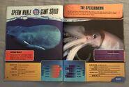 Predator Splashdown (13)