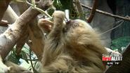 El Paso Zoo Sloth
