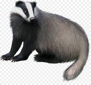 European badger clipart