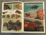 How to Clean a Hippopotamus? (8)