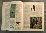 The Kingfisher Illustrated Encyclopedia of Animals (18)