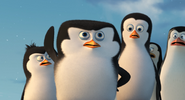 Young penguins save private