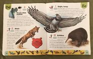 Endangered Animals Dictionary (6)