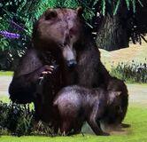 Grizzly Bear ZTX
