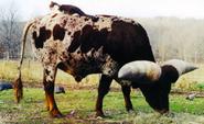 Lurch Cat Cow