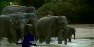 MMHM Asian Elephant