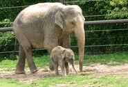 Photo-detail-asia-asian-elephants-2