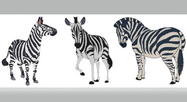 Zebras From Company Idiot