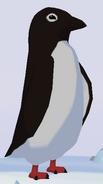 Adélie Penguin WOZ