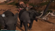 Four Elephants