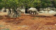 Life.of.Pi Rhinos