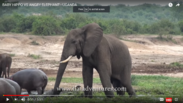 Pissed Off Adult Male Elephant and A Cross Male Rhinoceros Are Coming This Way