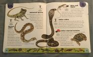 Reptiles and Amphibians Dictionary (12)