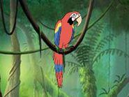 Rileys Adventures Scarlet Macaw