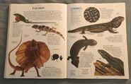 DK Encyclopedia Of Animals (107)