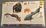 Extreme Animals Dictionary (5)