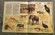 Macmillan Animal Encyclopedia for Children (15)