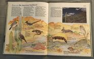 Macmillan Animal Encyclopedia for Children (20)