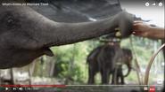 Science Insider Asian Elephants