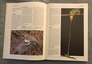 The Kingfisher Illustrated Encyclopedia of Animals (33)
