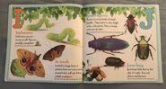 Bugs A-Z (5)