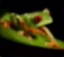 Frog-disneythinkfast