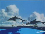 JEL-Dolphins