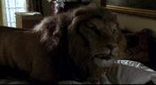 Jumanji 1995 Lion